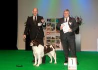 Hond van het Jaar show 2012 , Jarak beste van de Nederlandse Rassen