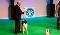 Beste hond van de Nederlandse Rassen: Jarak!