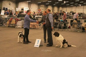 dogshow goes